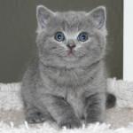 Лечебните сили на домашната котка