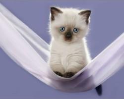 Мъркащата котка в дома може да ви излекува от различни заболявания