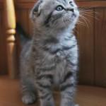 Котка - докторът в семейството