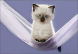 Котка - незаменимият лечител