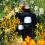Полезни съвети за събирането, сушенето и направата на билкови илачи