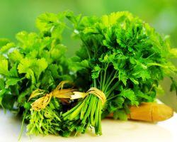 Най-мощното билково лекарство – магданоз