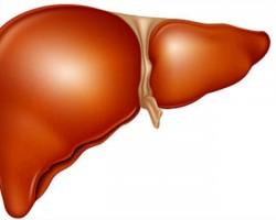 Билки при оток и възпаление на черния дроб