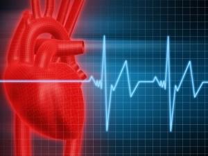 Болестта аритмия може да бъде лекувана с плодчета глог