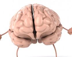 Пречистете кръвоносната система на мозъка