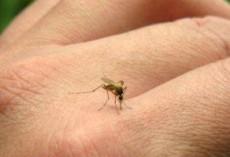 Домашен биорепелент против комари